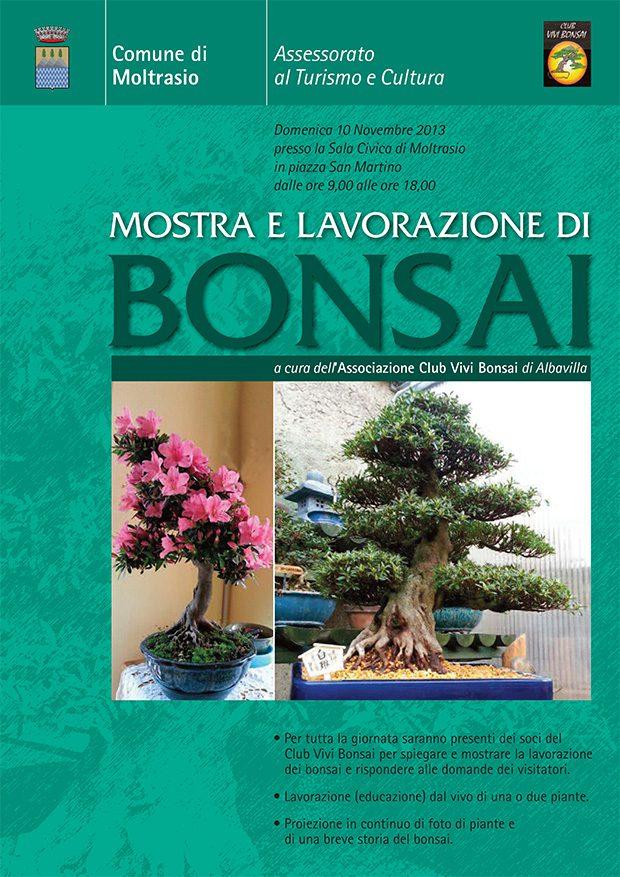 Moltrasio-Bonsai-mostra