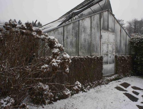 Villa Carlotta: visita invernale al giardino