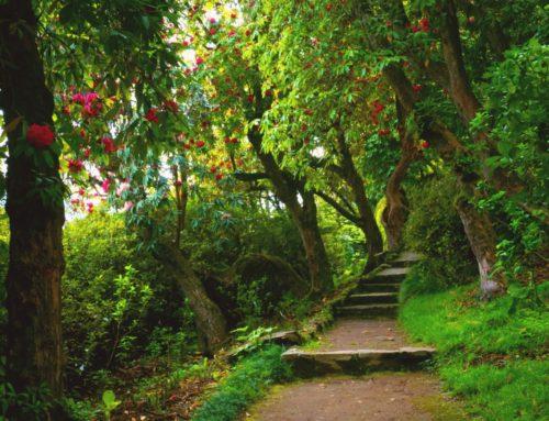 Villa Carlotta: percorso sensoriale